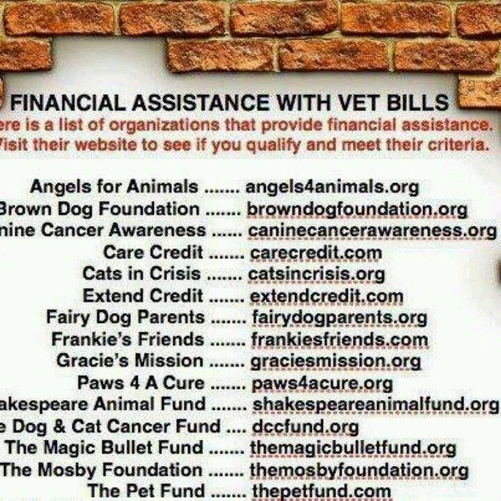 Seattle Washington animal fund resource list Vet bills