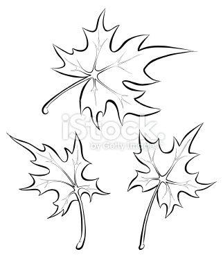 Black And White Maple Leaf Tattoo Maple Leaf Drawing Leaf Drawing