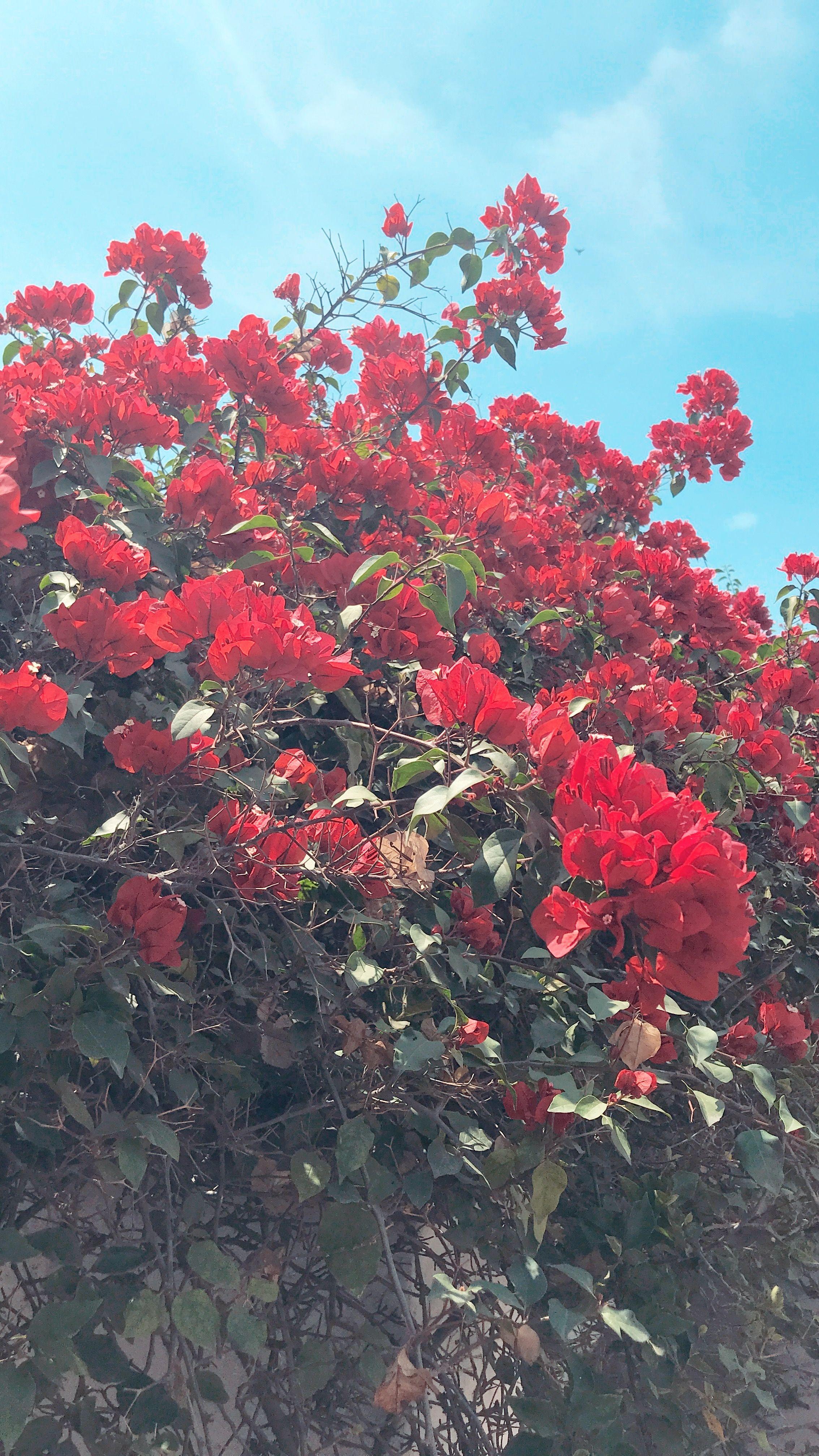 Roses @fabiennetaksie