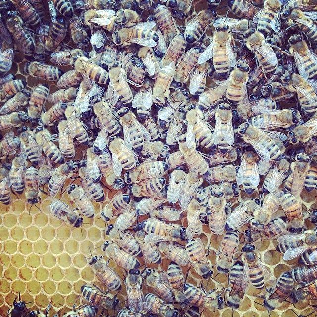 Bees on the rooftopfarm: GRO #dkgreen #bees #rooftopfarming #urbanfarming