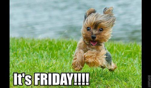 Yay Friday Yorkie Dogs Yorkie Yorkie Puppy The quality of a post is primarily judged by how much it contributes to a constructive discussion. pinterest