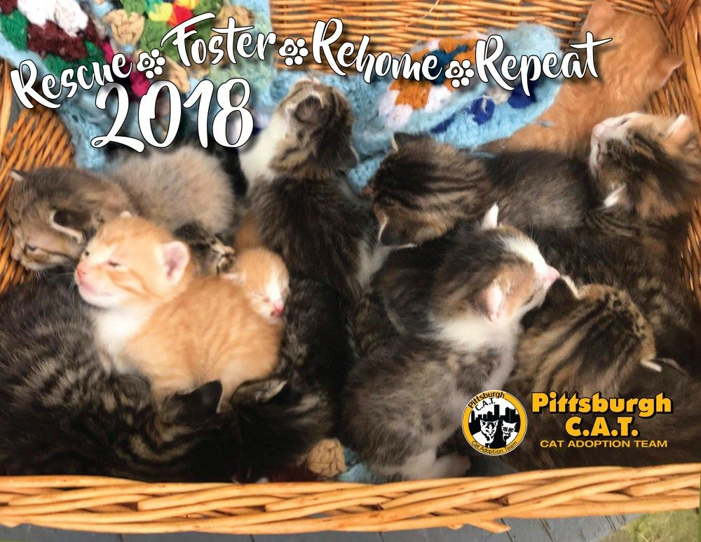 Rescues From Newborn Kittens to Seniors Pittsburgh C.A.T