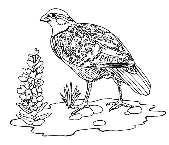 Bobwhite Wood Badge Pyrography Coloring Pages