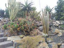 Jardim em Tenerife