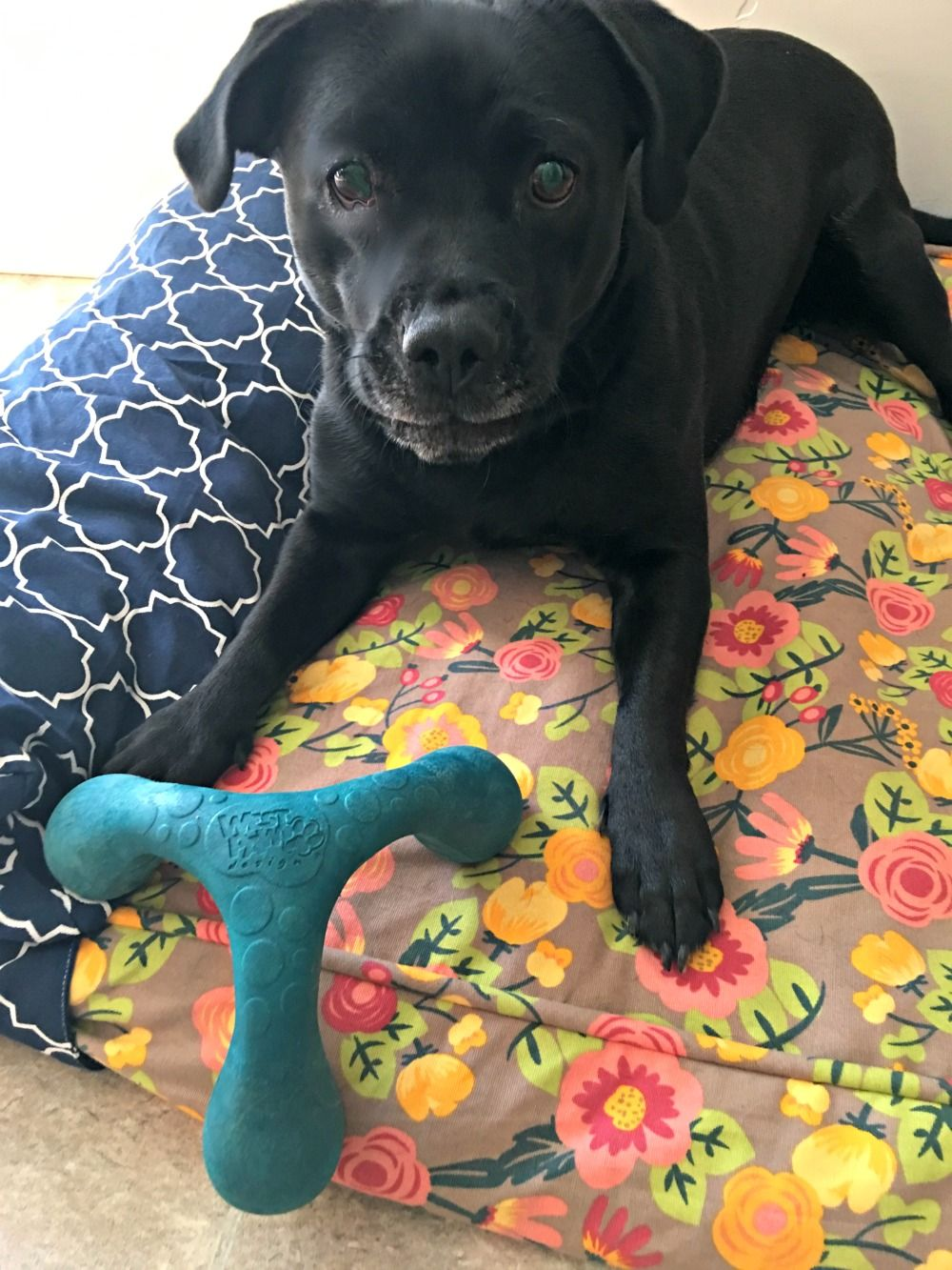 West Paw Design Wox Dog Toy Review Dog Toys Dogs Dog Supplies