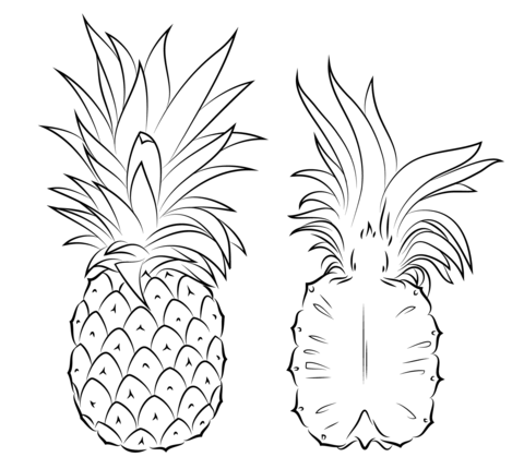 Pineapple and Cross Section Coloring page Pineapple