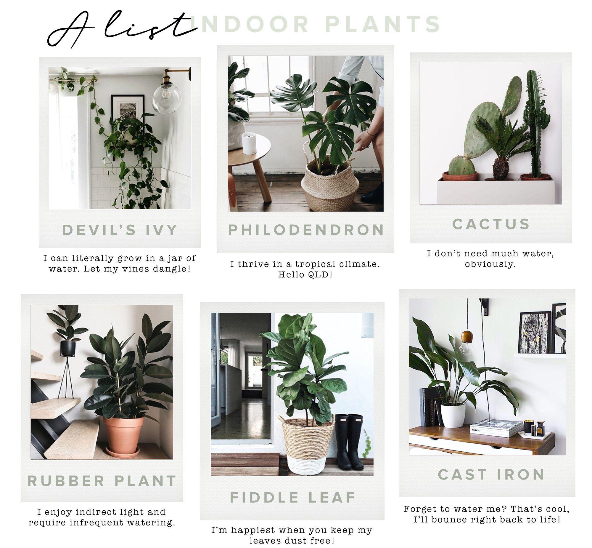 Nursery Indoor Plants Near Me: HOW TO: Keep Your Indoor Plants Alive