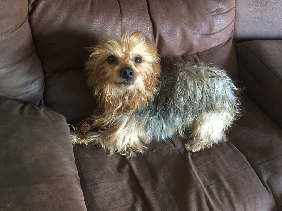 Lost Dog Male Homestead Fl Usa 33033 Losing A Dog