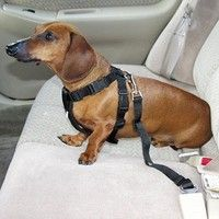Red Car Vehicle Auto Seat Safety Belt Seatbelt Harness Restraint for