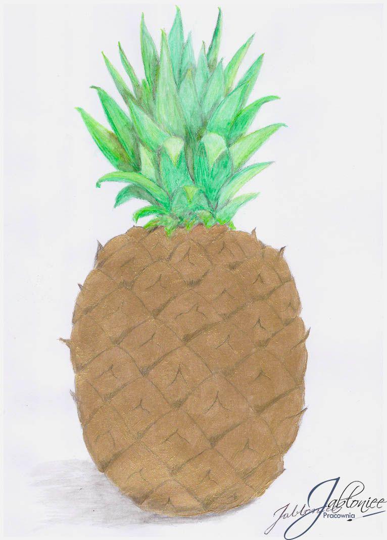 Ananas Rysunek pinedyta jabłońska on rysunek, akwarela | pineapple, fruit