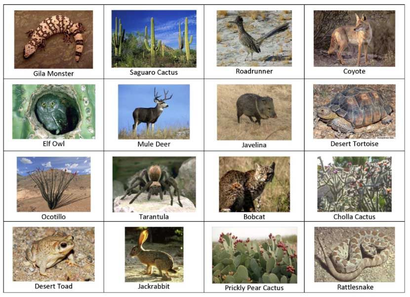Desert Animals Pictures With Names Desert Animals And Plants Names