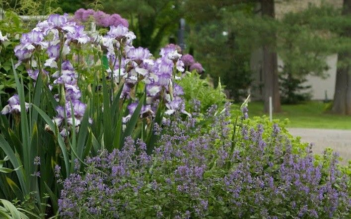 11 Garden Ideas To Steal From Martha Stewart Gardenista Spanish Bluebells Garden Design Daffodil Gardening