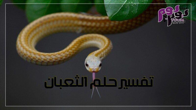 تفسير حلم الثعبان بالتفصيل Snake Wallpaper Yellow Snake Snake Images
