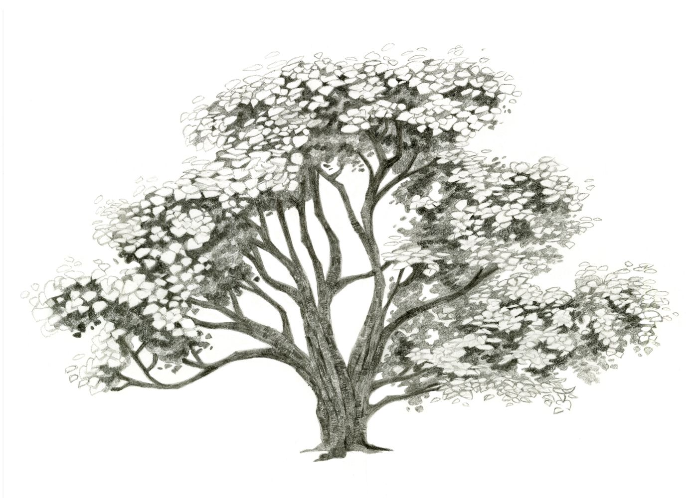 How To Draw A Realistic Tree Trunk Or Branch As Part Of