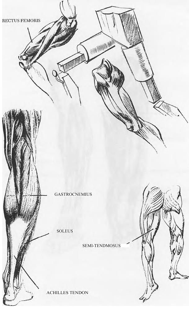 This is a picture of Monster Muscle Leg Drawing