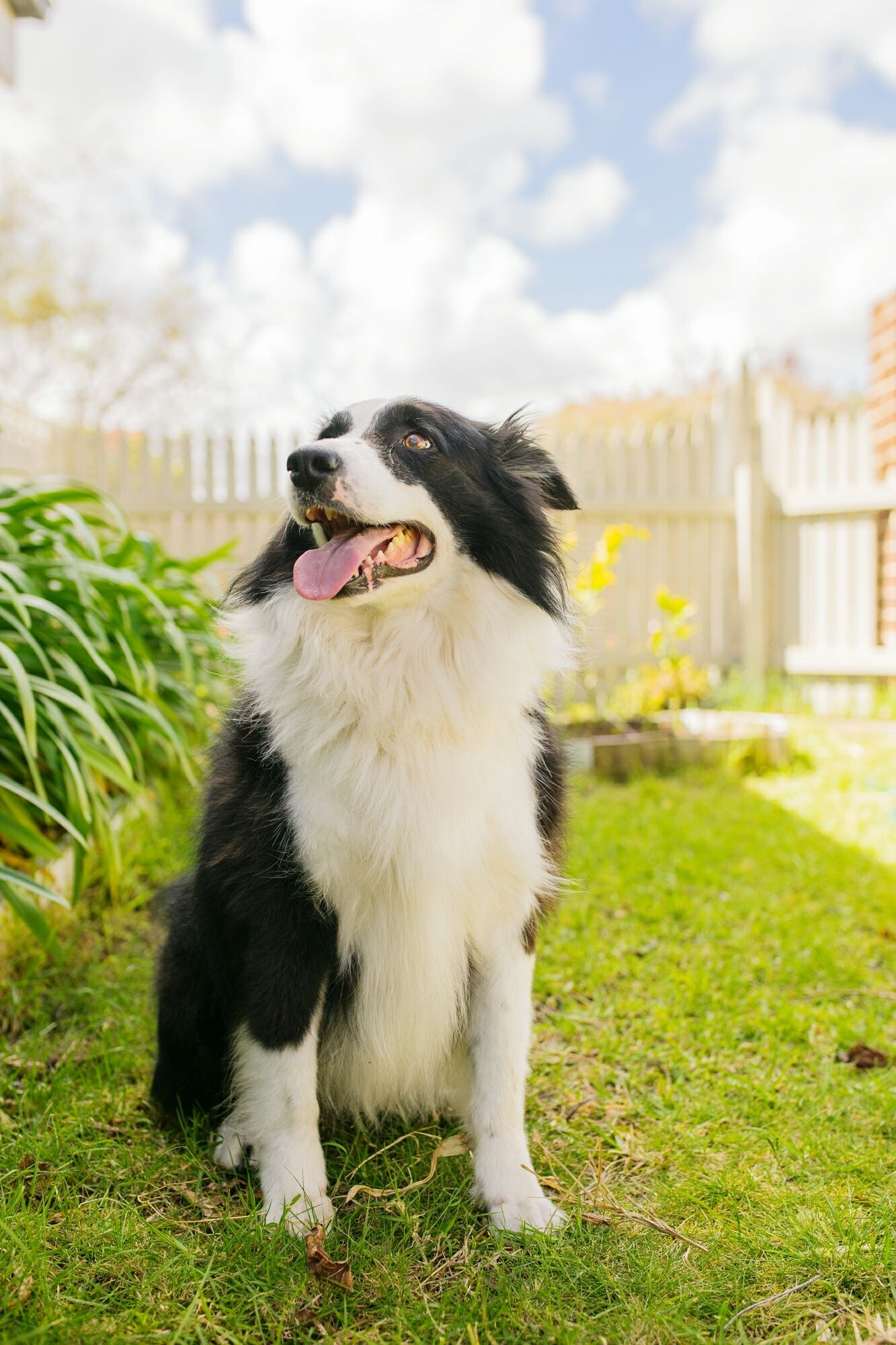 Six Things You Can Do To Make Your Backyard More Dog Friendly With Images Dogs Dog Friends Dog Friendly Backyard
