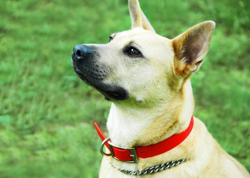 Adopt Victoria Hope Aka Torie Local To Meet On Dogs Dogs Puppies German Shepherd Dogs