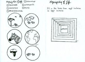organization of life coloring sheet population community ecosystem worksheets organizations. Black Bedroom Furniture Sets. Home Design Ideas