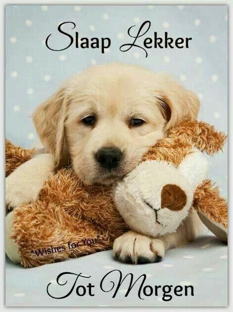 slaap lekker | goeie nag | best puppy food, puppy socialization