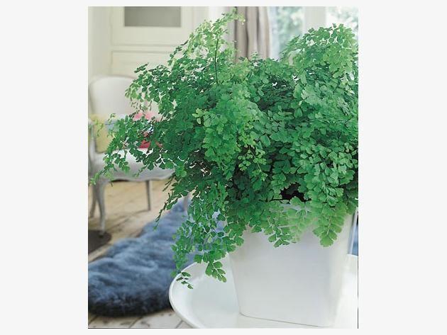 Hängepflanzen Zimmer hängepflanzen fürs zimmer gardening