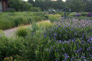 MIDWEST GROUNDCOVERS Display Gardens & Plant Trials: Piet Oudolf Designed Garden