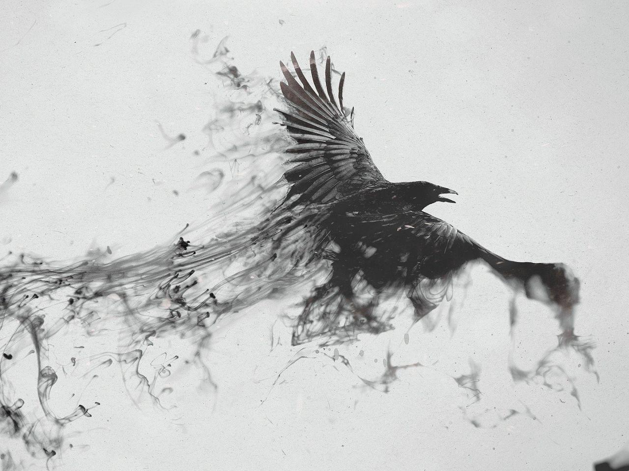 Minimalist Raven Tattoo: Crow Art, Raven Flying, Raven Art
