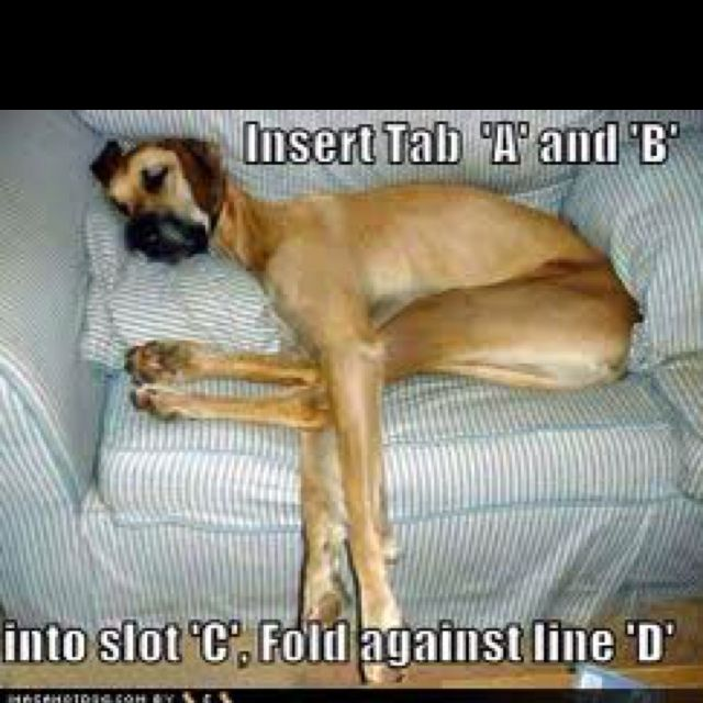 Insert C And D Dog Picture