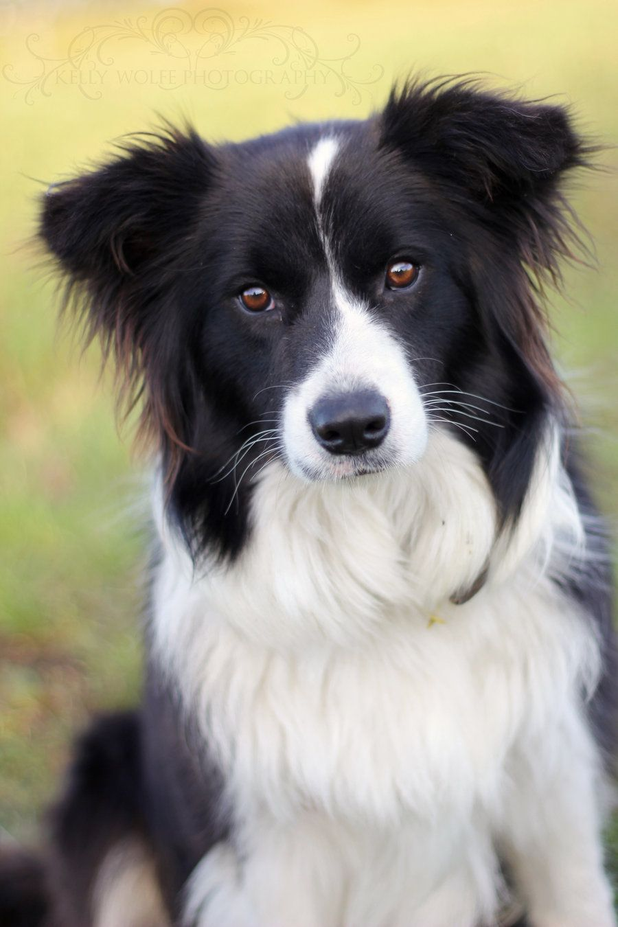 My Adorable Border Collie Flick She Inspires Me Every Day And