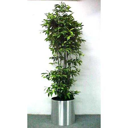 Worry Free Plants That Won T Poison Your Pets Cat Safe Plants House Plants Toxic Plants For Cats