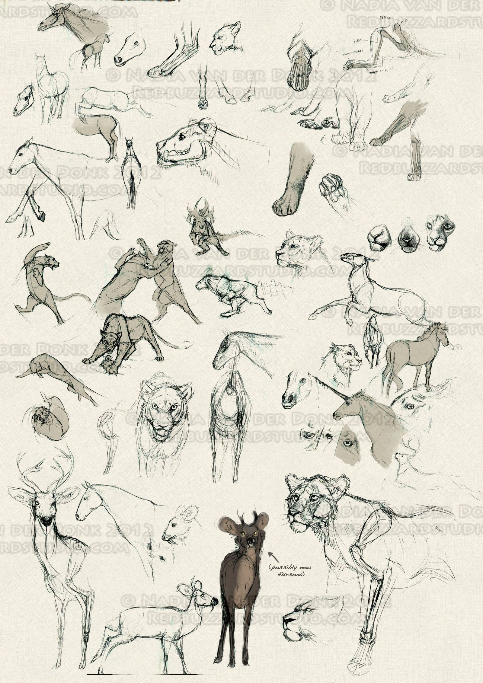 Sketchbook Dump 4 by NadiavanderDonk | Sketch de Animais | Pinterest ...