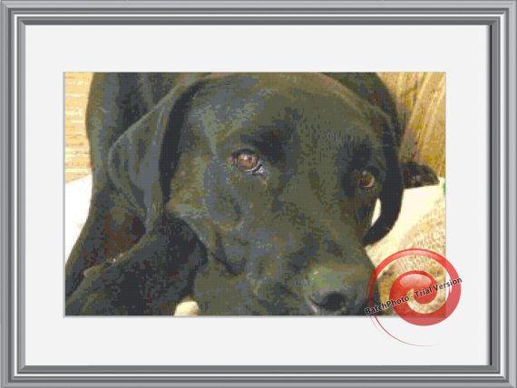 Chocolate Lab Dog Cross Stitch Pattern, Instant Download PDF