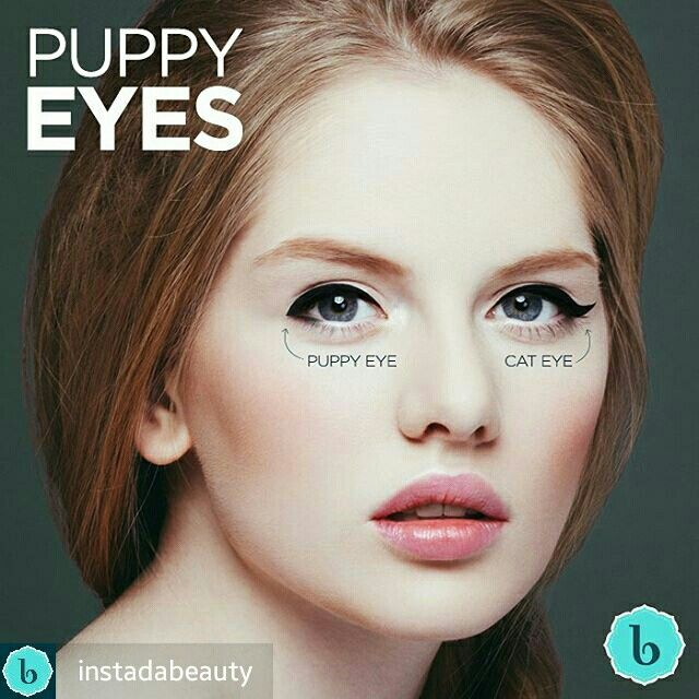 Puppy Eye Vs Cat Eye Eye Makeup Pinterest Makeup Puppy Eyes