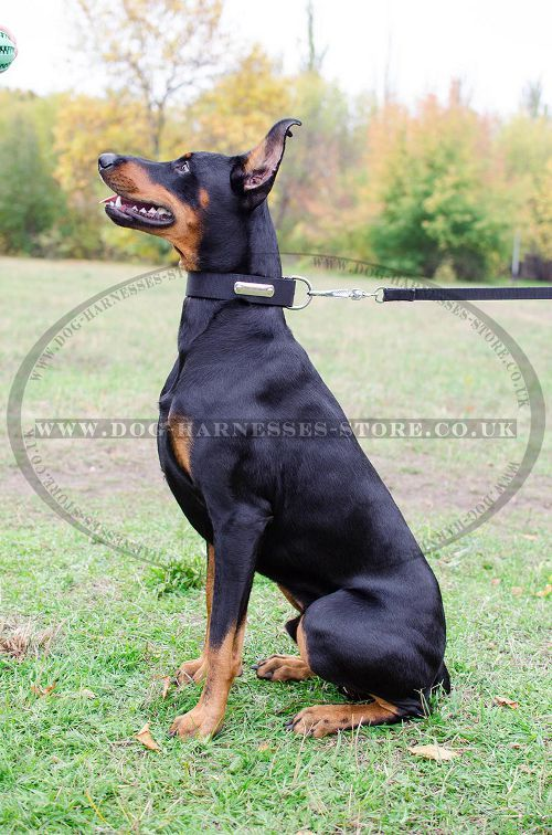 Pin On Doberman