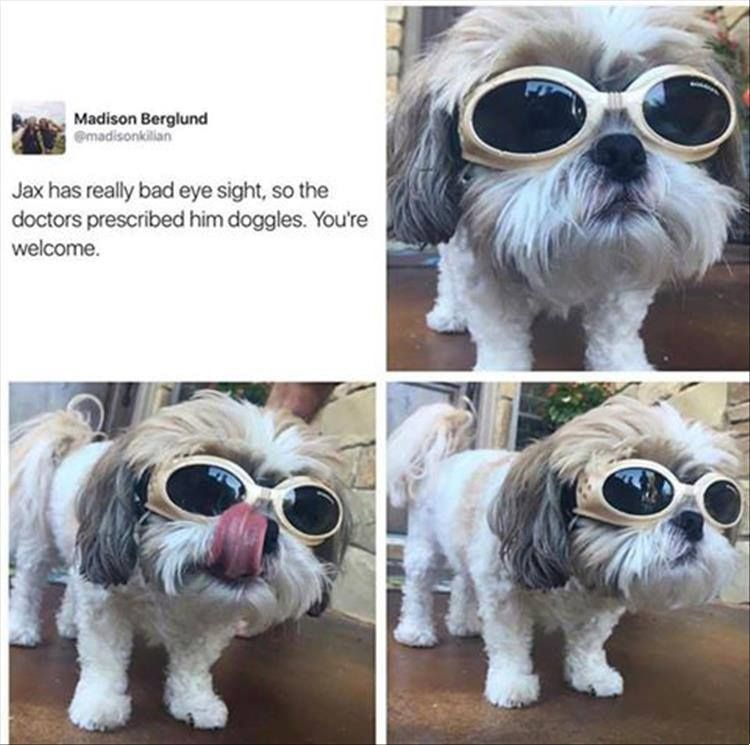 42 Funny Dog Memes Thatll Make Your Day!