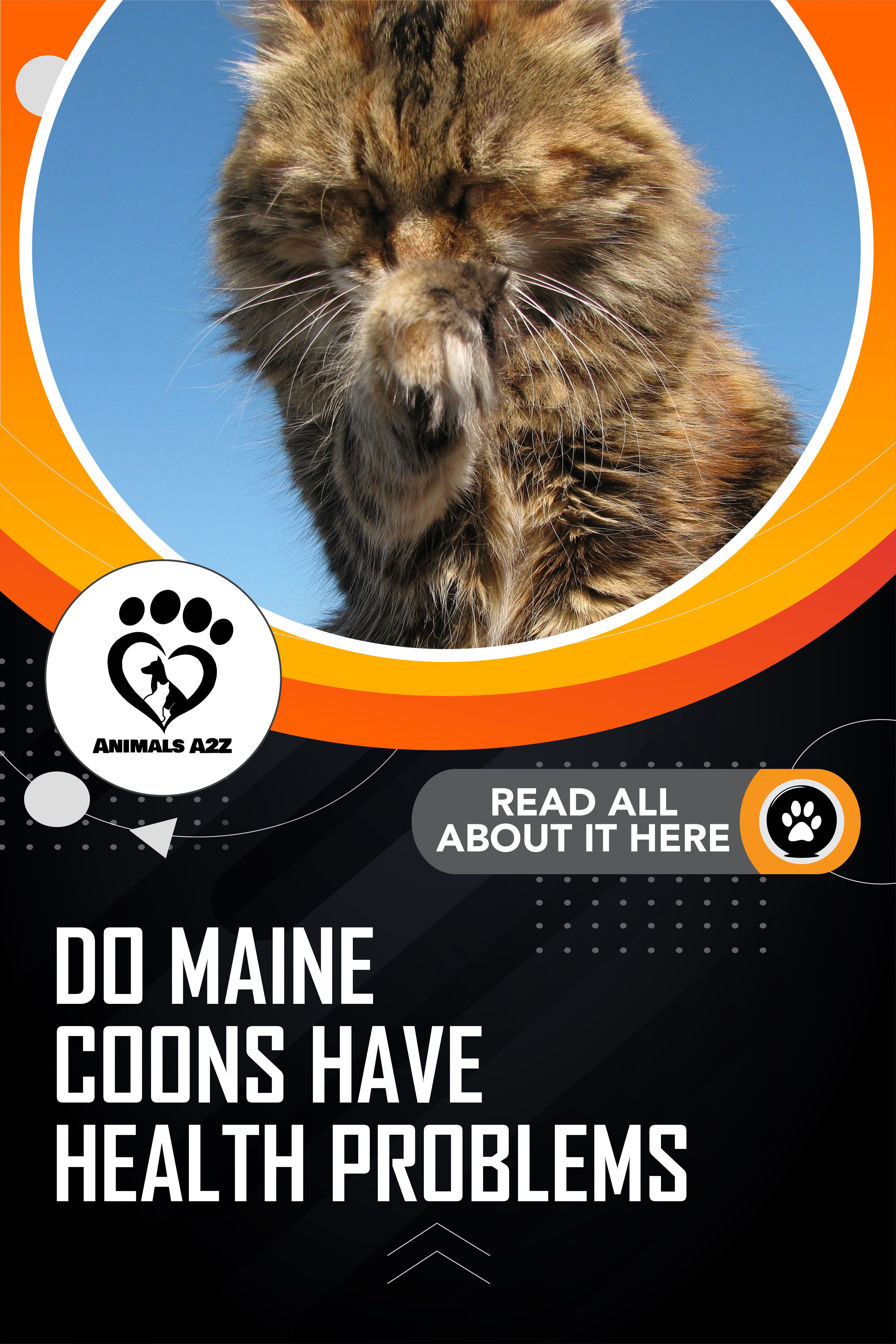 Pin On Maine Coon Cat Facts Info About Maine Coons