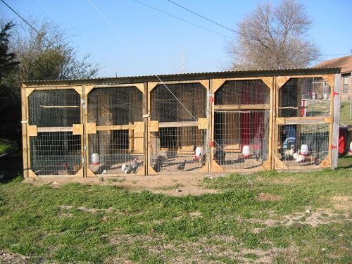 Breeder Coop Separate Each Chicken Breed For Breeding. Can Have Two For  Chickens And Two For Pheasant Or Duck