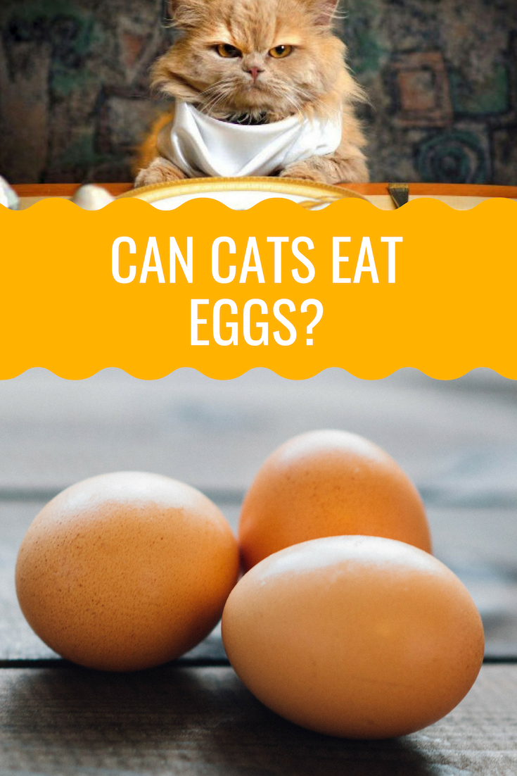 Can Cats Eat Eggs? Cat nutrition, Animal nutrition, Cat diet
