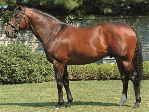 Fusaichi Pegasus on Stallion Register Online