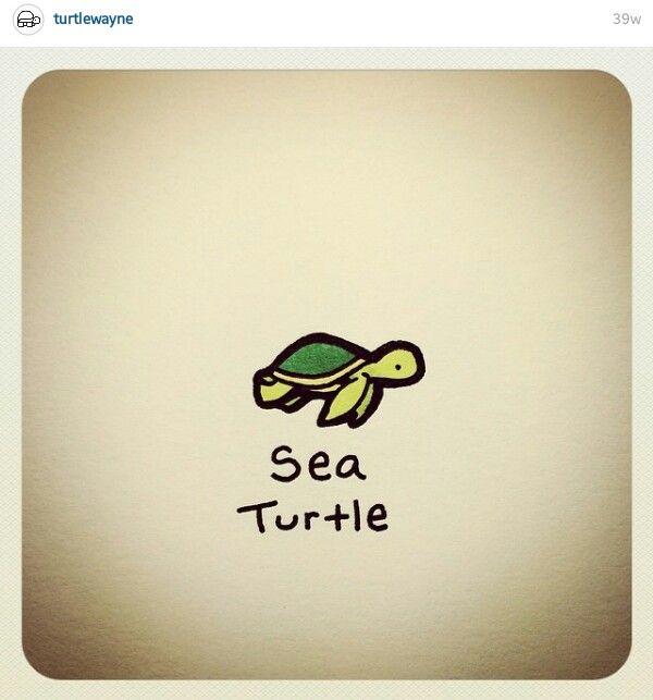 Sea Turtle Turtle Drawing Cute Turtle Drawings Turtle Sketch