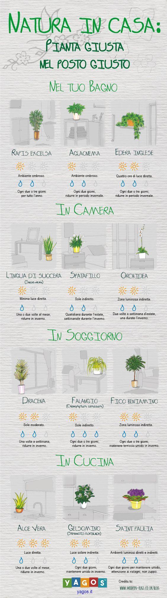 Piante Da Giardino Ombroso scopri quale pianta è più adatta ai tuoi ambienti di casa