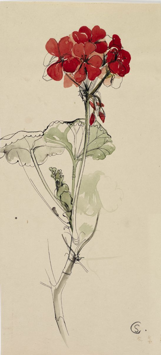 Red Geranium, ink and watercolour, Shirley Craven, 1957. © Private Collection/ Ferens Art Gallery, Hull Museums. Although Shirley Craven's designs were largely abstract, these observational drawings show her keen eye and instinctive ability to compose a design