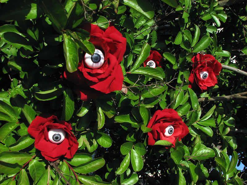 """roses with eyeballs"""