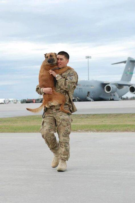 Dog welcoming his soldier home