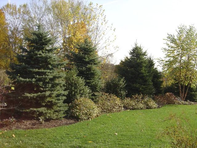 Yards With Front Berm Plant Inventory Spruce Berm Large Backyard Landscaping Landscape Design Privacy Landscaping