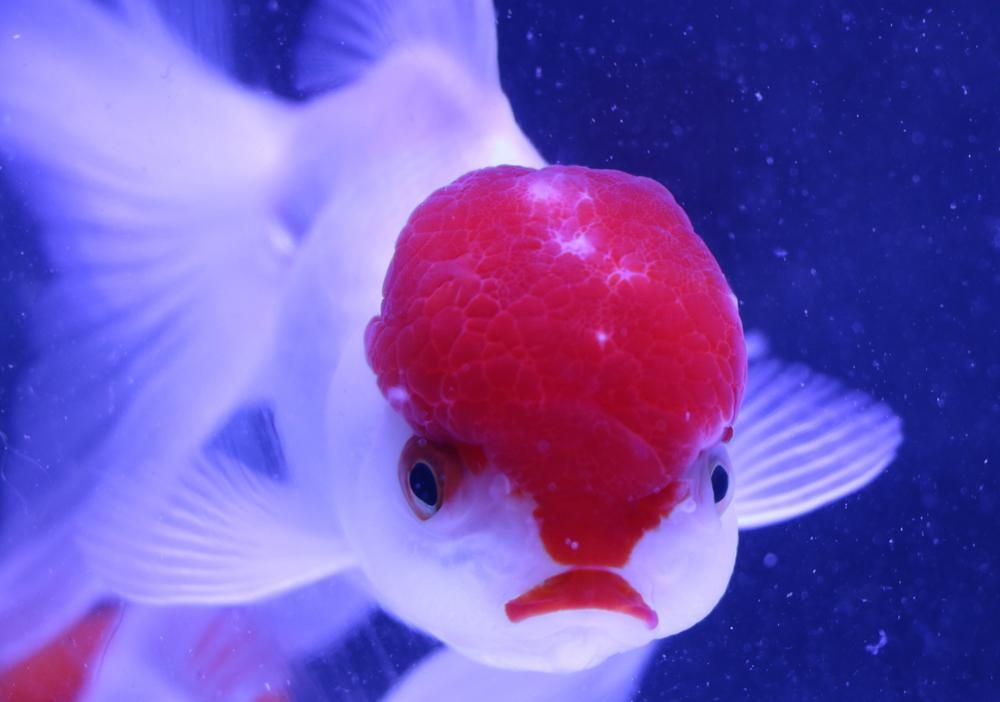 Online mail order Live fish store,Stocking a large range of