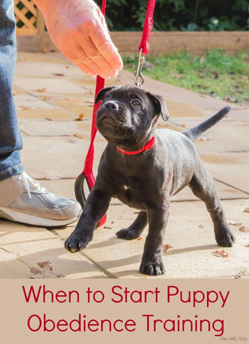 When To Start Puppy Obedience Training Canineobedience Puppy
