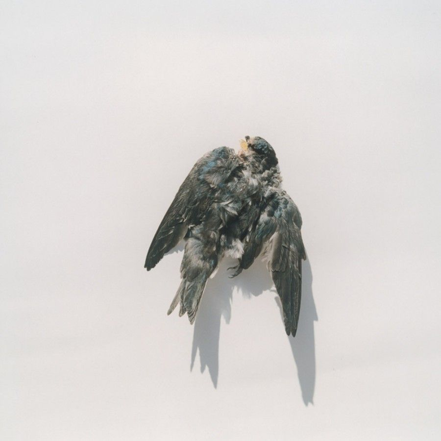 Photograph by Rinko Kawauchi - from Illuminance