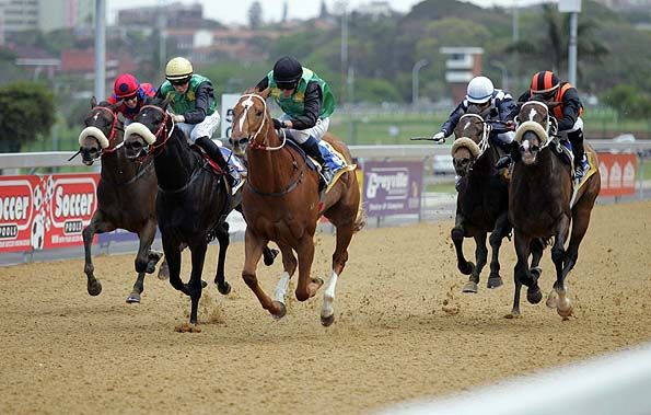 Horse racing results today greyville betting betting terms explained trixie