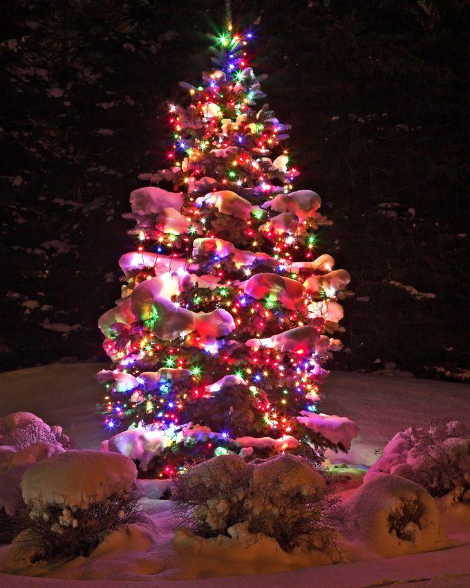 Christmas Tree Lane Los Angeles: Christmas Tree Peace
