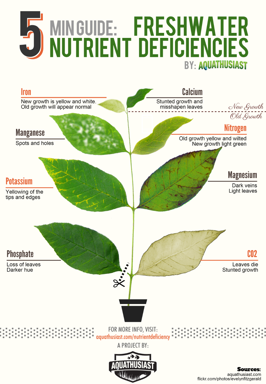How to correct freshwater plant nutrient deficiencies diagnose the